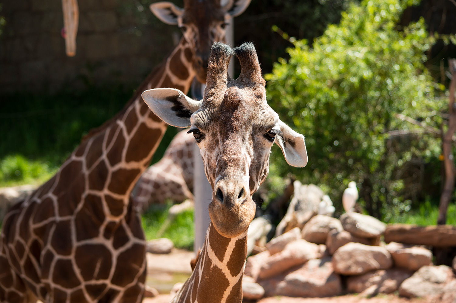 You are currently viewing Cheyenne Mountain Zoo